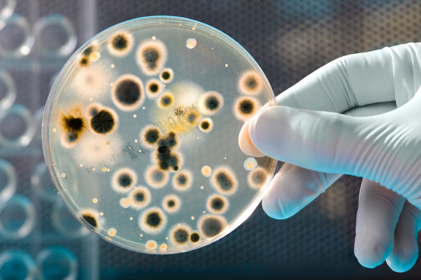 can microbial factories be an answer